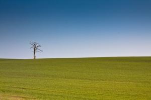 green open rural fields