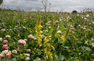 image of wild flowers in fields