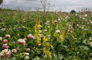 image of wild flowers in fields